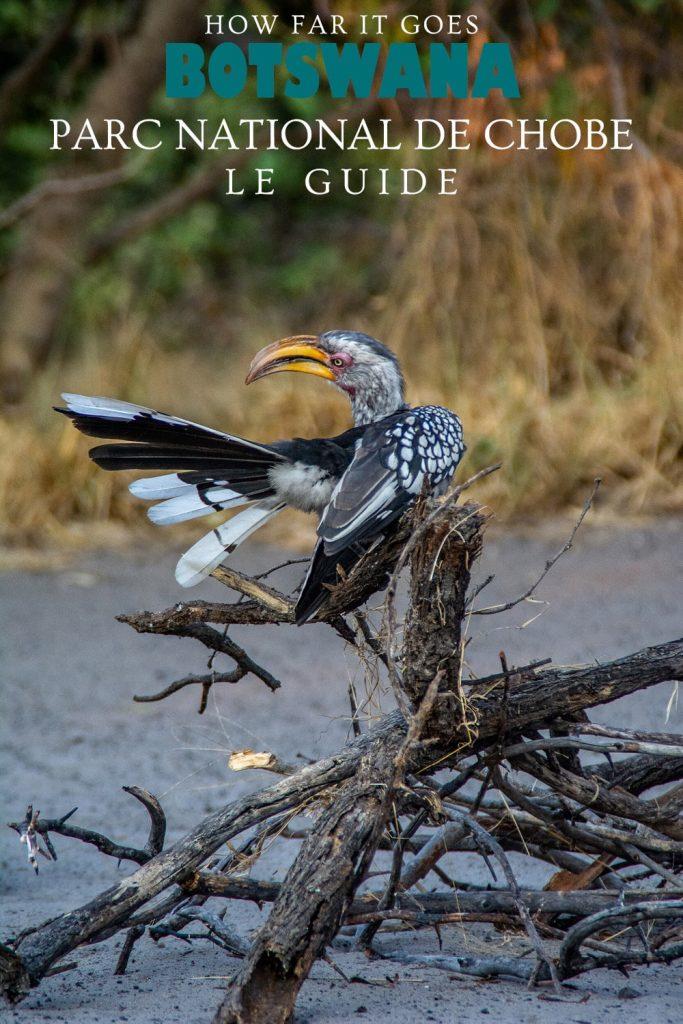 Oiseau au parc national de Chobe